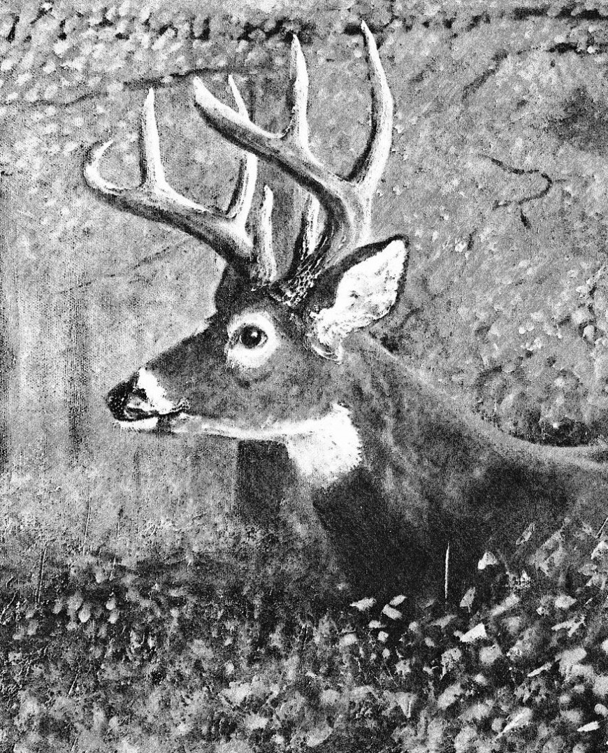 Deer Sketch, circa 1988 Acrylic paint, white gesso, and graphite